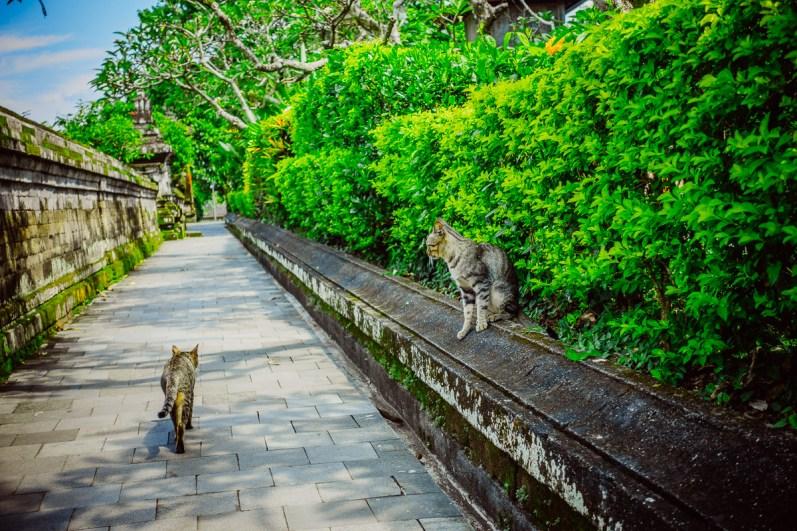 Bali21150417