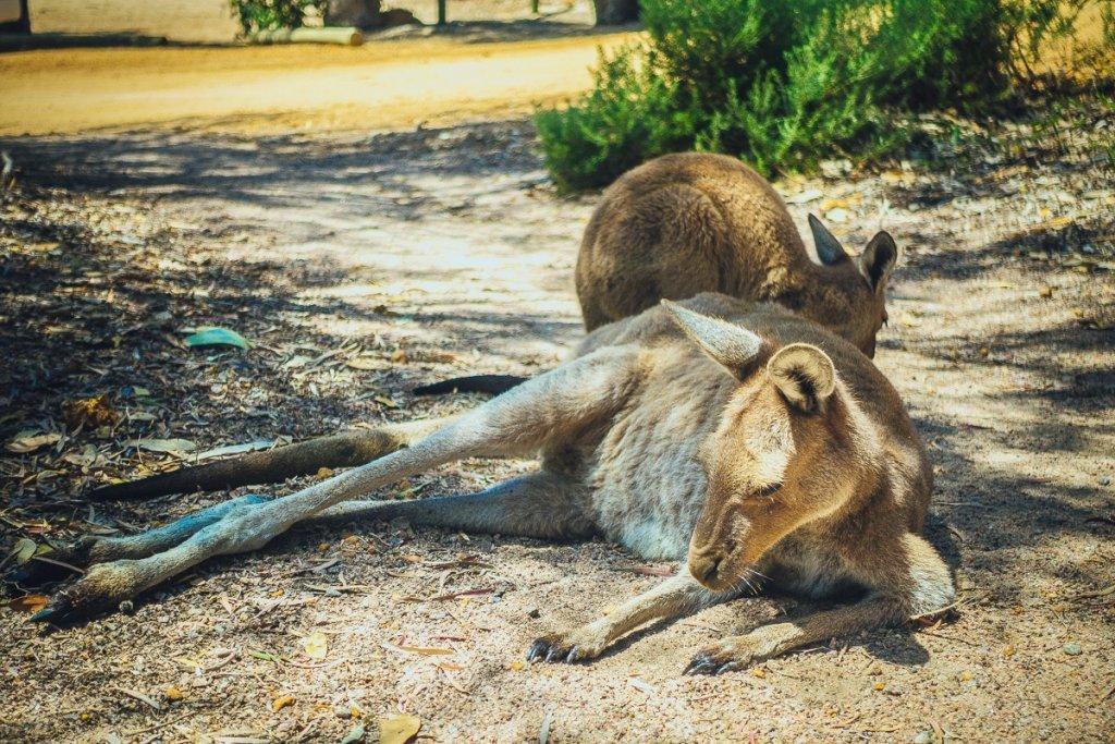 roadtrip doorheen australie