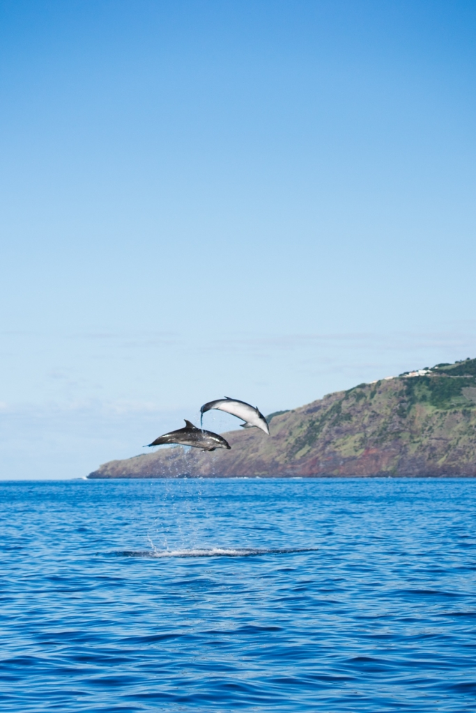 whale watching tours azores