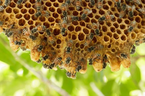 Image result for honey bees images