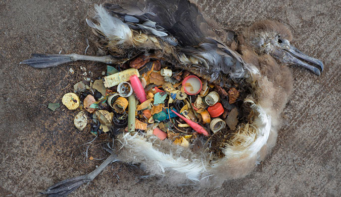 Risultati immagini per Great Pacific Garbage Patch