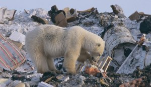 Garbage Patches in the Arctic Ocean | The Inertia