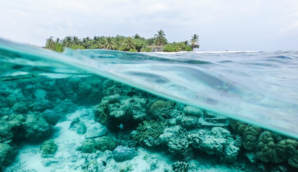 Scientists Predict 90% of Coral Reefs Will Disappear By 2100