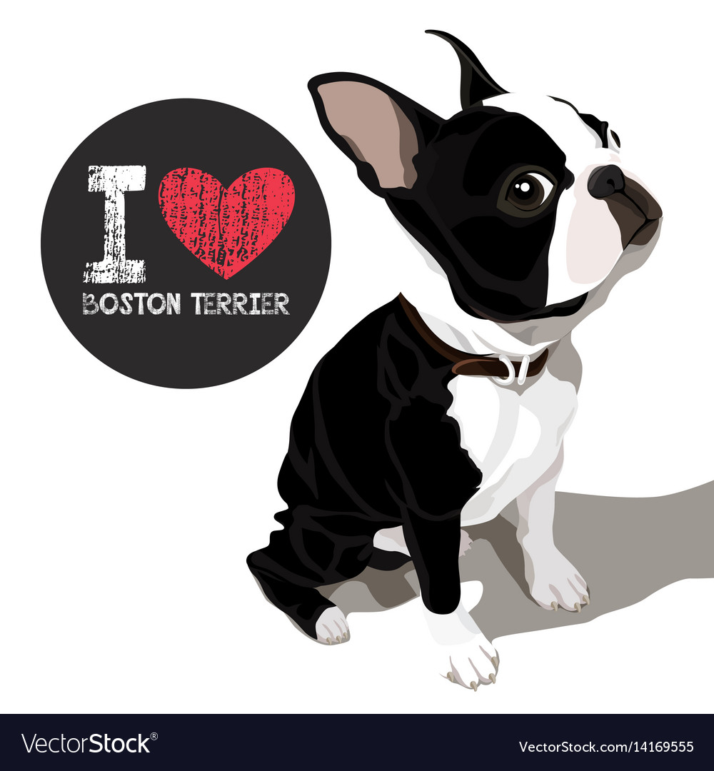 Download I love boston terrier Royalty Free Vector Image