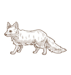 Animal Sketches Vector Images Over 100 000