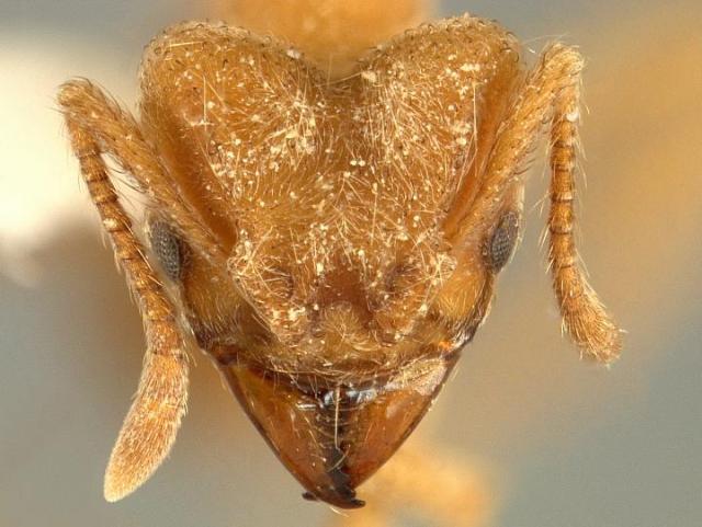 radiohead-ant