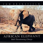 African Elephant Poster Animal Posters