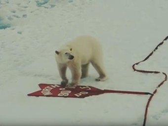 Фото: ФГБУ «Национальный парк «Русская Арктика»