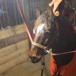 Winter Remixit Horse English Pony Riding Image By Meg