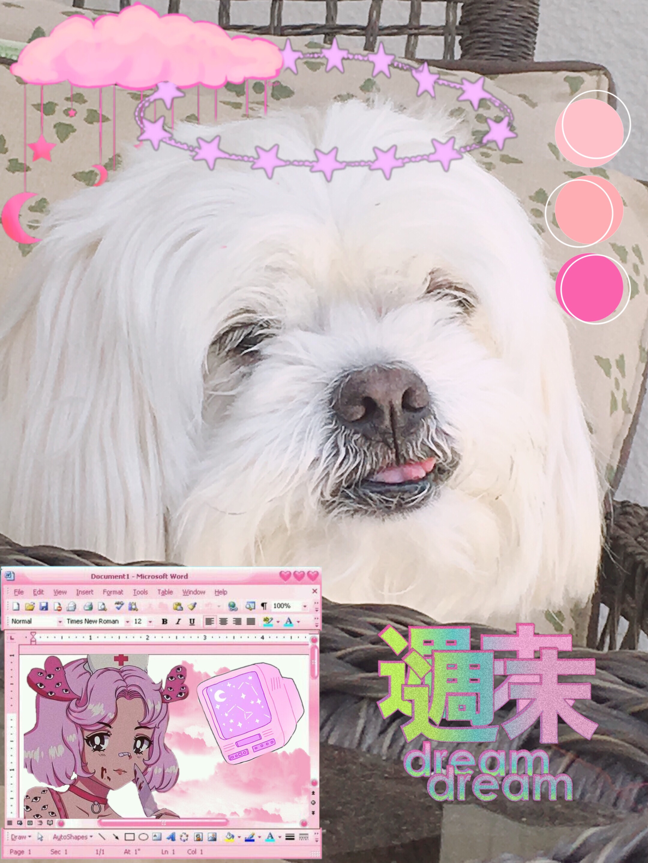 Dog Doggo Puppy Puppies Aesthetic Image By Leon