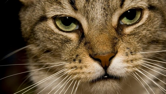 close-up of a tabby cat's face; the cat has a serious, deadpan stare