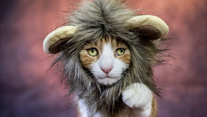 cat with a lion costume