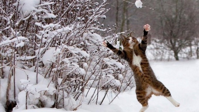 Cat playing with snowball. cats vs snow.