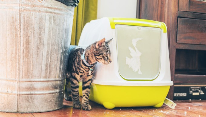 Cat beside litter box