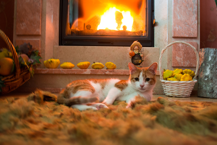 Cats Staying Warm In Winter!