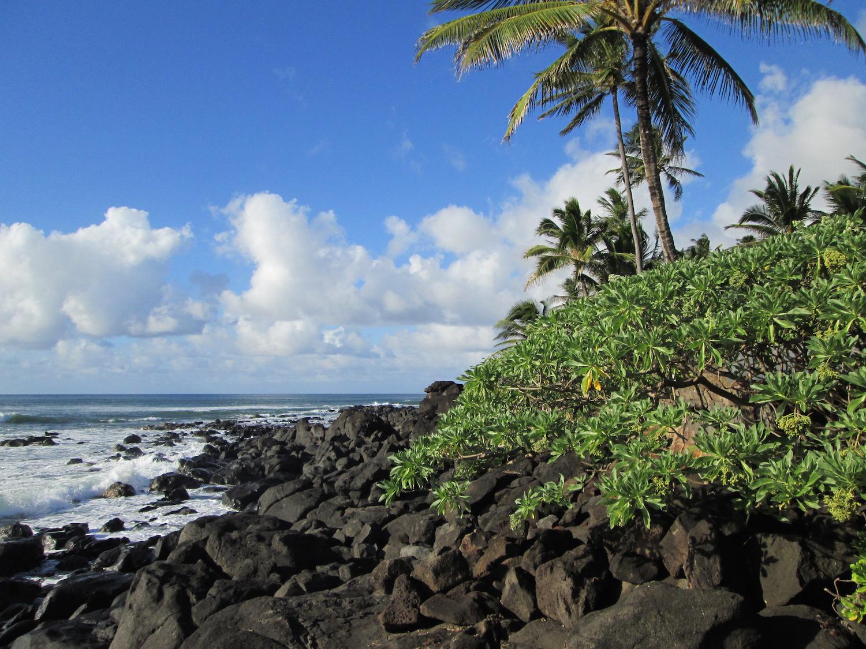 Laniakea Beach, Haleiwa, Oahu, Hawaii