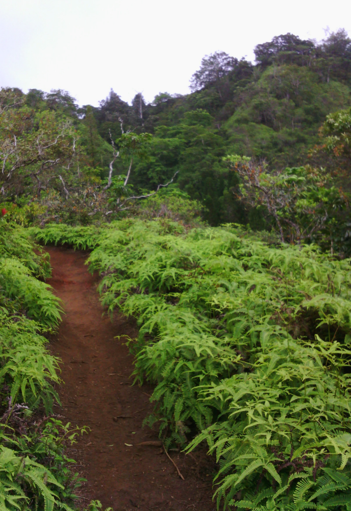 Kuli'ou'ou Ridge Trail, Hawaii Kai, Oahu, Hawaii