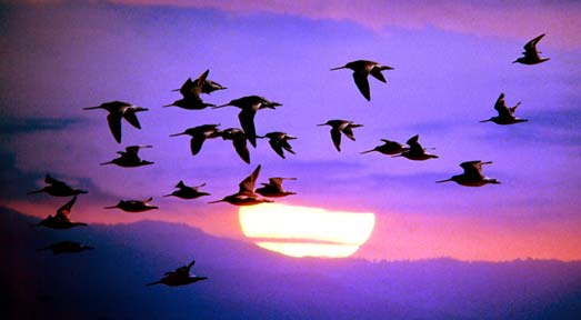 Migrations in The B2B Telemarketing Industry image bird migration