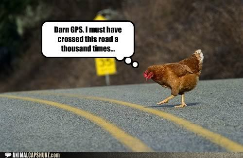 funny-animal-captions-darn-gps-i-must-have-crossed-this-road-a-thousand-times