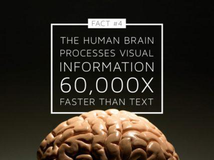 brain-process-visual-information-faster