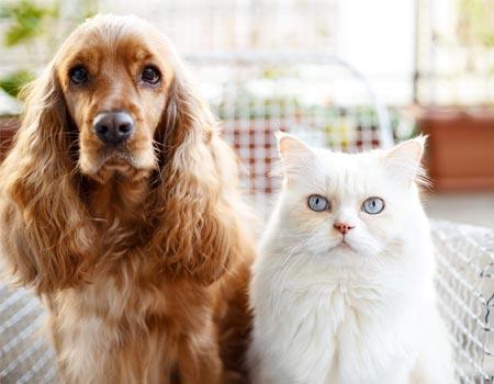 Compare Cheap Pet Insurance Quotes Compare The Market
