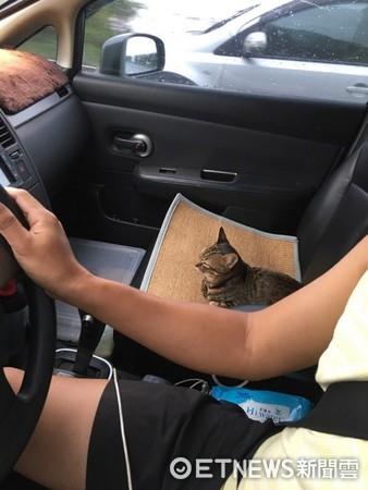 一天沒見貓奴還坐長途車...喵皇森77「D字眼」合照笑翻主人(圖/謝姓網友提供)