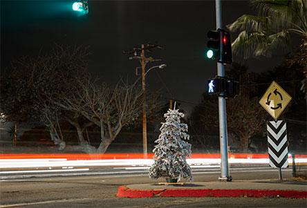 gente, decora, navida, antes de tiempo, noviembre,. agosto, septiembre, octubre, navidenos, arreglos, loca, deliz, la navidad, emociones, tristeza, que se celebra en navidad, cristo, jesucristo, dios, noticias, excelsior, mexico