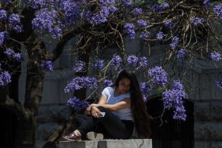 Mujer bajo la sombra de las jacarandas