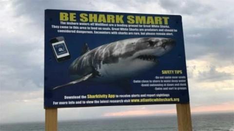 Tiburón mata a hombre en EU