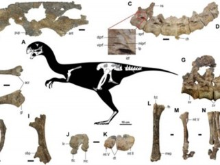 Descubren nueva especie de dinosaurio con plumas