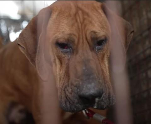 video perrito llora tras ser rescatado iba a ser sacrificado Pausa MX Día del Perro: Perrito llora tras ser rescatado; iba a ser sacrificado