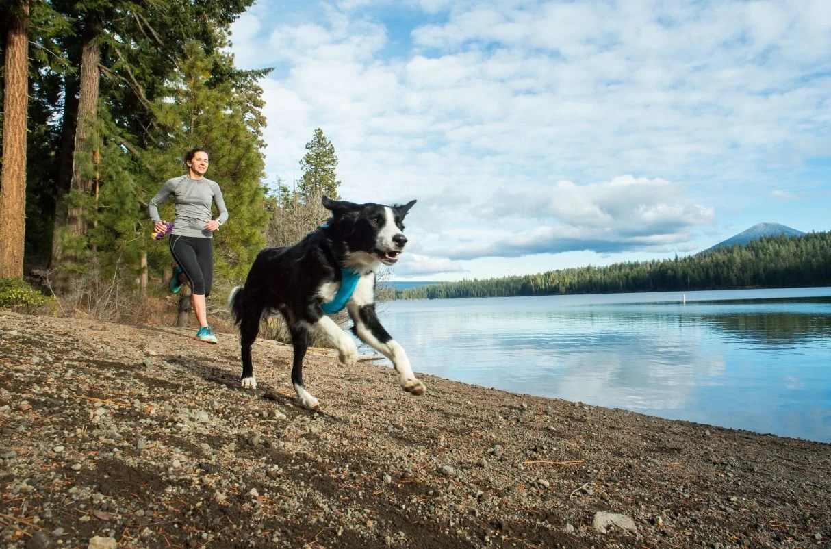 Best Dog Harness Keep Your Dog In Control With The