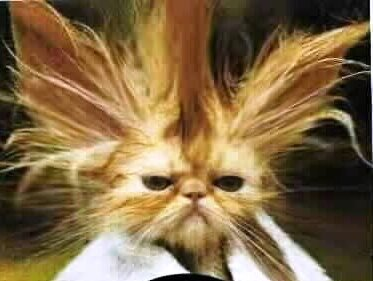 bad hair day or how to keep good service going