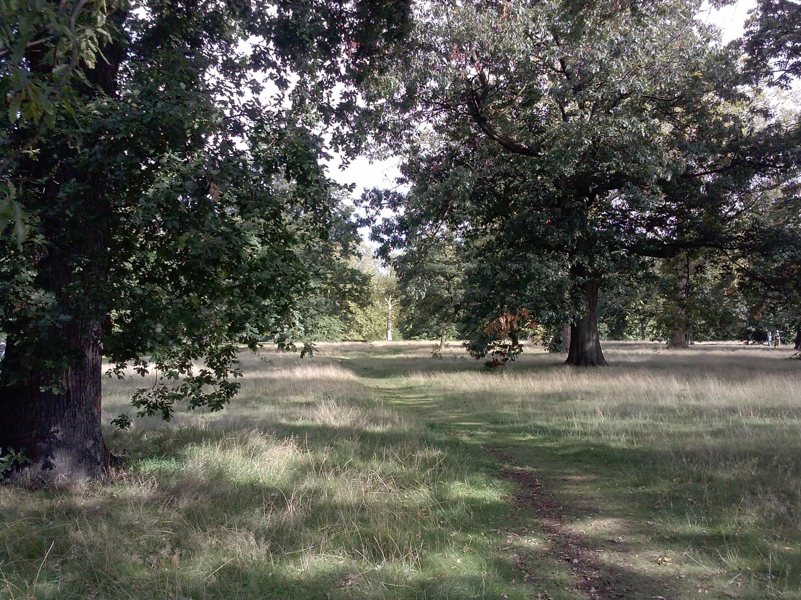 CAPAStudyAbroad_London_Fall2015_From_Alyssa_Reimenschneider_-_Hyde_Park