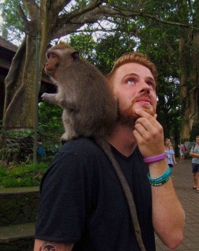 morgan-bean-monkey