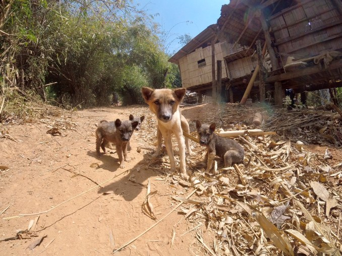 puppies-south-east-asia