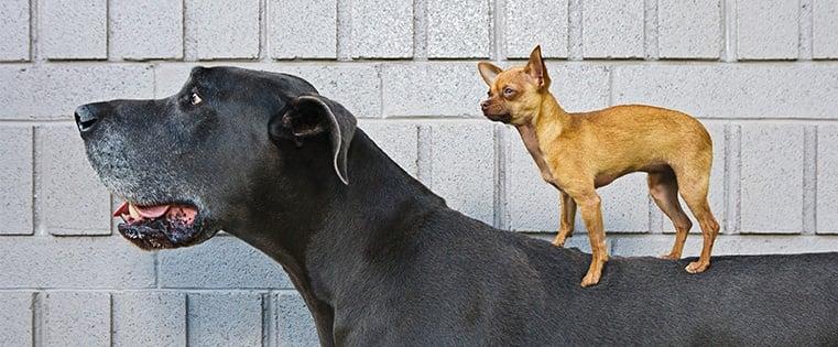 Bigdoglittledog.jpg