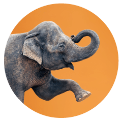 Elephant-office-pet.png