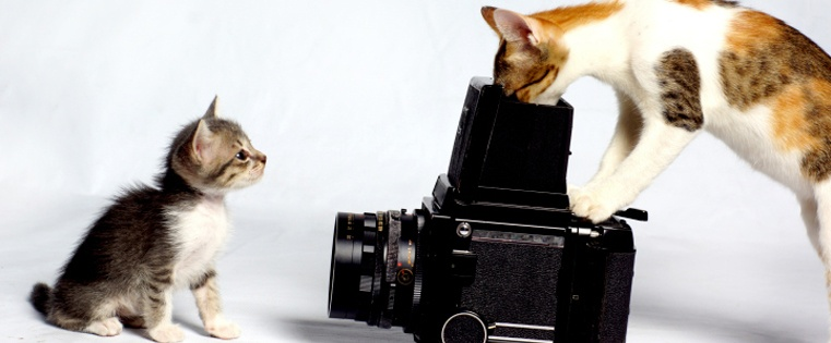 cats-hollywood.jpg