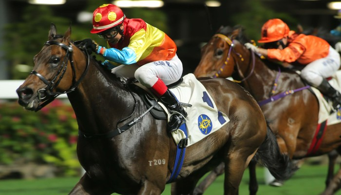 Tony Millard pushes the benefits of South African horses ...