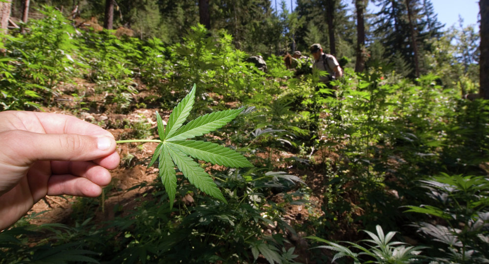 The government argued that the family's operation did not comply with the state's medical marijuana law, and that marijuana remains federally illegal.