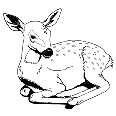 wildlife coloring pages # 20