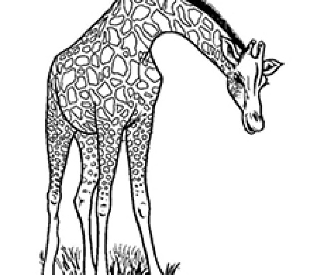Top  Free Printable Wild Animals Coloring Pages Online