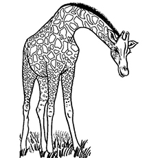 animal coloring pages printable # 0