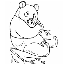 Top 25 Free Printable Zoo Coloring Pages Online