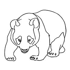 pages of panda bears a cute baby panda coloring pages