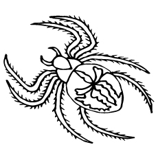 top 10 free printable spider coloring pages online