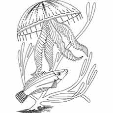 finding nemo stingray coloring page free coloring pages printable