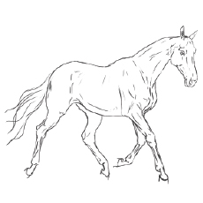 realistic horse coloring pages # 10