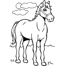 realistic horse coloring pages # 5